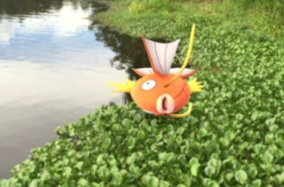 Pokemon n'est pas écolo